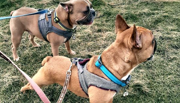 Winston & Oscar